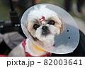 犬 動物 本 82003641