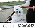 犬 動物 本 82003642