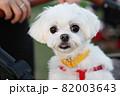 犬 動物 本 82003643