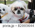 犬 動物 本 82003644