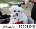犬 動物 本 82003645