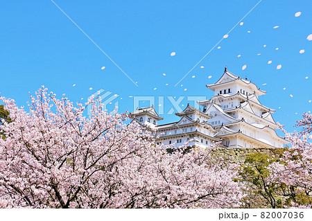 兵庫県 春の桜吹雪と青空の姫路城 82007036