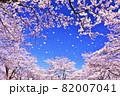 春の桜と桜吹雪 82007041
