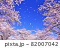 春の桜と桜吹雪 82007042