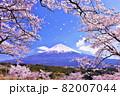 春の桜と桜吹雪 そして青空の富士山 82007044