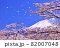 春の桜と桜吹雪 そして青空の富士山 82007048