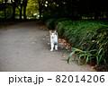 道端で立ち尽くすかわいい野良猫 82014206