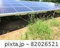 雑草が生い茂った太陽光発電所 82026521