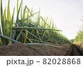 葱畑イメージ 82028868