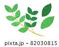 葉っぱ 82030815