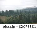 Spruce trees if fog 82073381