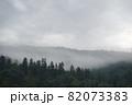 Spruce trees if fog 82073383