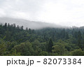 Spruce trees if fog 82073384
