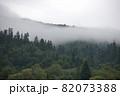 Spruce trees if fog 82073388