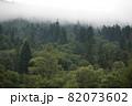 Spruce trees if fog 82073602
