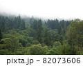 Spruce trees if fog 82073606