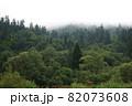 Spruce trees if fog 82073608