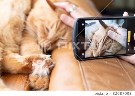 ペットをスマホでパシャリ  茶トラ猫 82087003