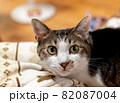 見つめる猫 キジトラ猫 82087004