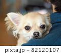 飼い主の肩越しにこちらを見つめるチワワ犬 82120107