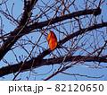 木に一枚だけ残った赤い葉 82120650