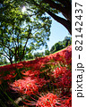 彼岸花の群生する公園の縦写真 82142437
