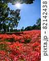 彼岸花の群生する公園の縦写真 82142438