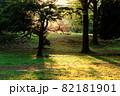 西陽が差し込み秋色に染まる公園の風景 82181901
