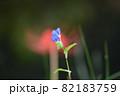 ツユクサ(露草) 82183759