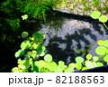 ウィローモスと浮き草の池 82188563