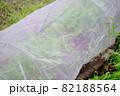 家庭菜園の小松菜栽培のイメージ 82188564