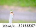 棒の中で育つ生命力の強い葉 82188567