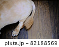 フローリングの上の犬の可愛い尻尾 82188569