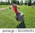 Turkeys on a green lawn 82209291