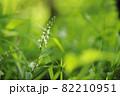 ヌマトラノオの花 82210951