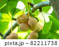 銀杏とイチョウの葉 82211738