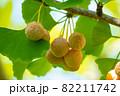 銀杏とイチョウの葉 82211742