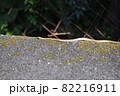 秋のヘビ 82216911