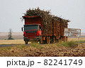 収穫されたサトウキビを運ぶ大型トレーラー ブラジル 82241749