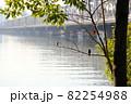 淀川と高架と小鳥(ジョウビタキ) 82254988