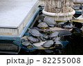 ミシシッピアカミミガメ、イシガメ、クサガメ2 82255008