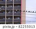 電線の上のハト 82255013