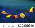 黄色から赤に色づいた桜の葉の落葉イメージ 82266640