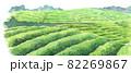 水彩茶畑 82269867