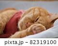 招き猫のポーズで寝る猫 82319100