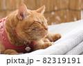 マットレスの上で昼寝する猫 82319191