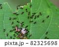 餌に群がる蟻(埼玉県/9月) 82325698