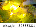 秋イメージ  82355881