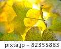 秋イメージ  82355883