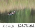 水辺の王者、ミサゴ 82373108